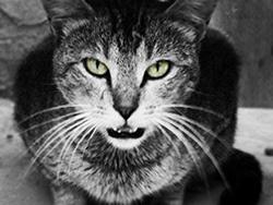 Katino žvilgsnis